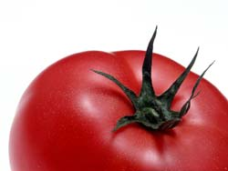 1244092033_tomat (250x188, 5Kb)