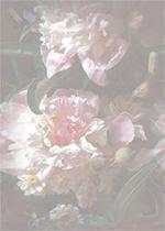 Untitled-4 copy (150x210, 74Kb)