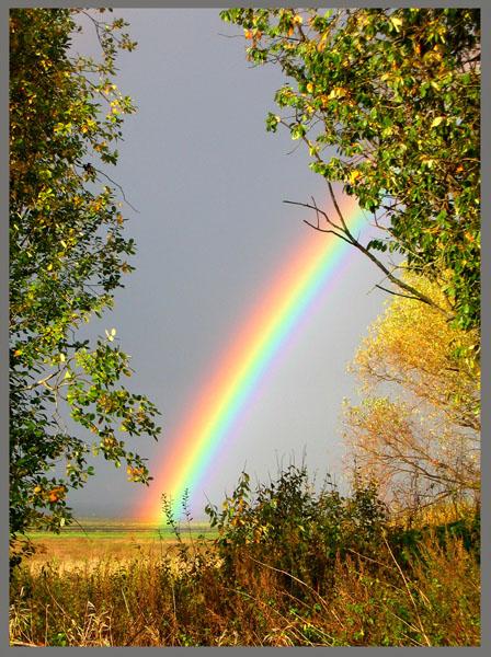 http://img1.liveinternet.ru/images/attach/c/0//45/410/45410294_short.jpg