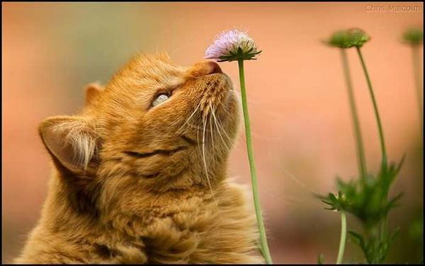 Несколько жизней одной рыжей кошки....