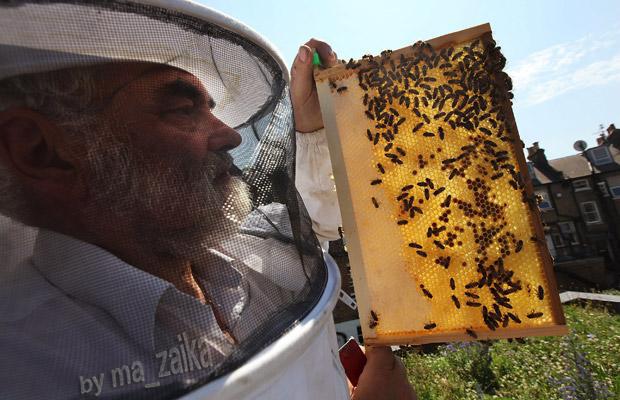 Пчеловодство в Лондоне