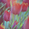 http://img1.liveinternet.ru/images/attach/c/0//46/249/46249006_random38.jpg