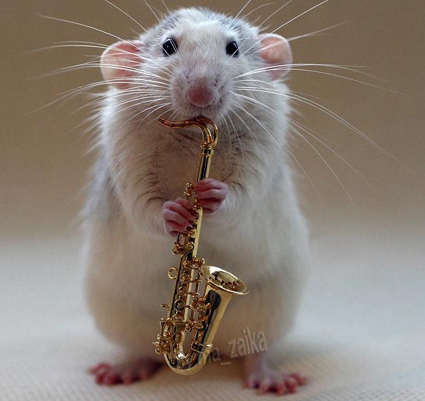 Талантливая крыса