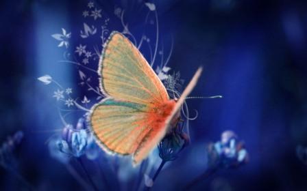 butterfly_4 (448x280, 17Kb)