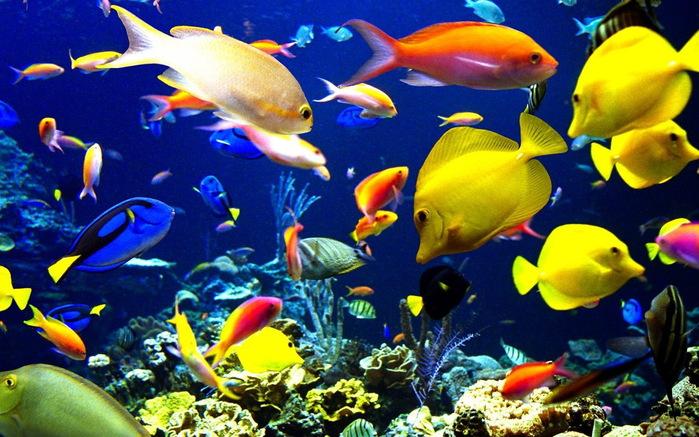 аквариум Красного моря, Трииночка