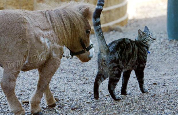 маленькая лошадка Koda