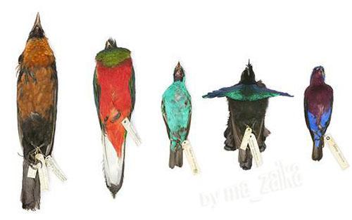 Бесценные тропические птицы
