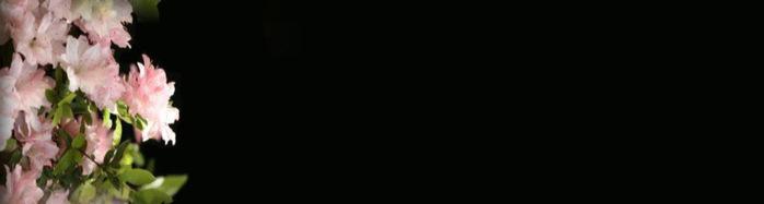 (698x187, 18Kb)