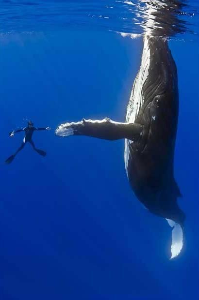 фото человек и кит