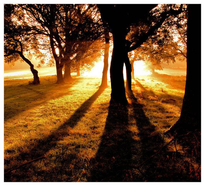 Autumn_Glow_by_dust_digital (700x636, 222Kb)