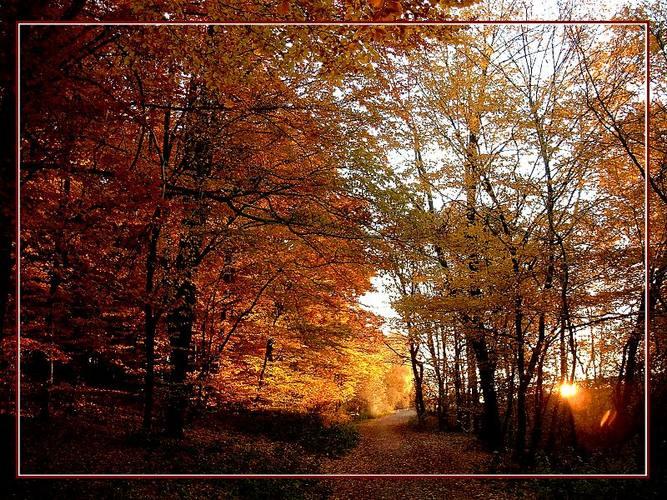 http://img1.liveinternet.ru/images/attach/c/0//47/896/47896435_1898894.jpg