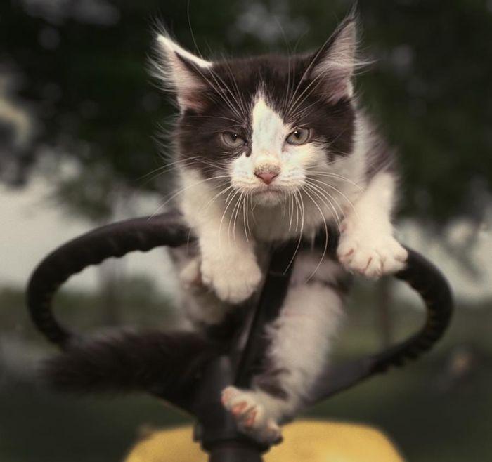 http://img1.liveinternet.ru/images/attach/c/0//48/169/48169815_1251656396_73_animals.jpg