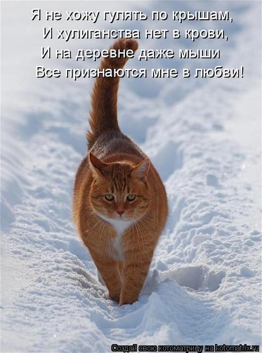http://img1.liveinternet.ru/images/attach/c/0//48/215/48215827_1251743390_kot24.jpg