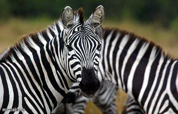Животные Масаи Мара