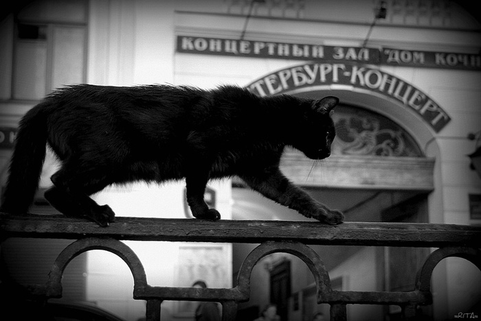 ! 237 b&w Piter cat DSC_0926 (700x468, 94Kb)