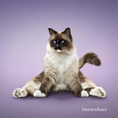 http://img1.liveinternet.ru/images/attach/c/0//51/610/51610507_1259125453_snowshoes.jpg