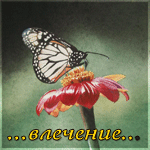 http://img1.liveinternet.ru/images/attach/c/0//51/712/51712239_1259339274_13.png