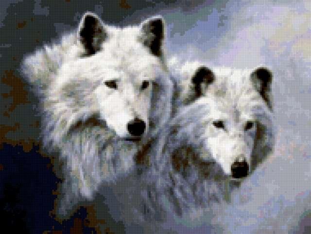 """Схема вышивки """"Волки""""."""