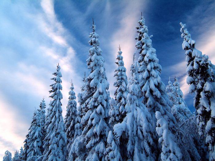 Запретный лес 51883251_6976217_1193947277_SnowCoveredmlandSweden
