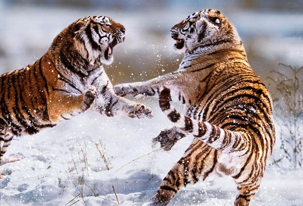 Варварские реалии дикой природы от Стива Блума (Steve Bloom)
