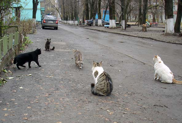 декабрьские коты