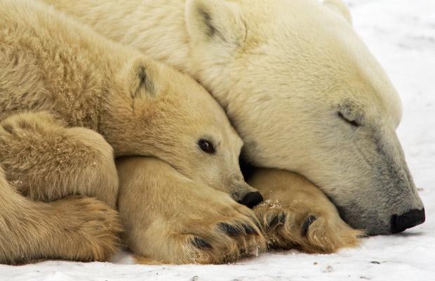 Копенгагенская конференция по изменению климата: виды в зоне риска.