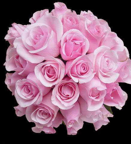 52417254_5217491_FlowerPic_10.jpg