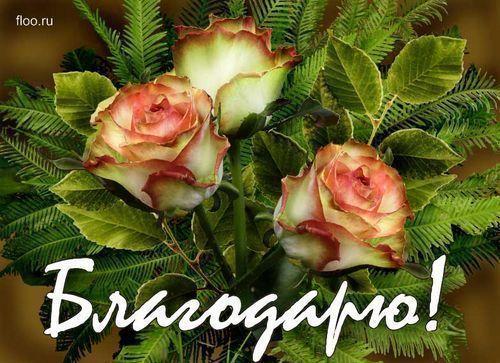 51862417_51613868_50563230_42962832_blagodaryu (500x363, 53Kb)