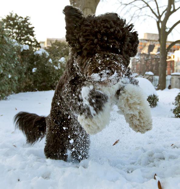 Под тяжестью снежного одеяла на северо-востоке США.