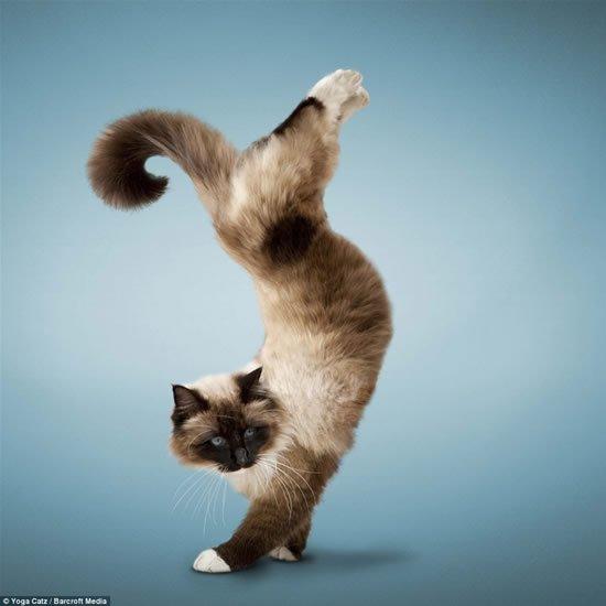 Коты - йоги :)))