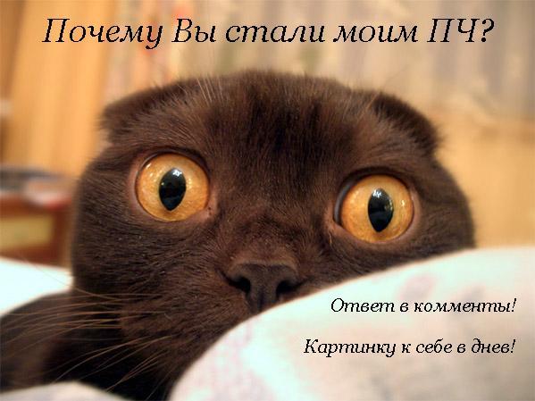 1263073965_7817203_cat (599x449, 39Kb)