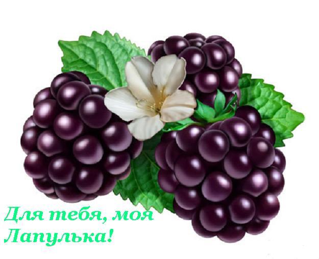 22032934_dlya_tebya_moya_lapulya (625x507, 37Kb)