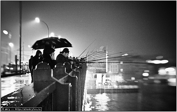 Кошачьи слуги, добытчики рыбы на мосту Галата