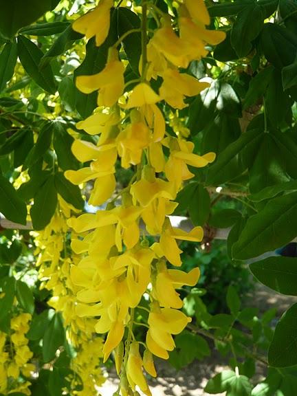 Японский Парк цветов Асикага (Ashikaga Flower Park) -2 68503