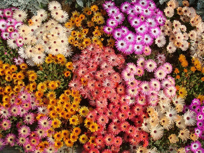 Японский Парк цветов Асикага (Ashikaga Flower Park) -2 69124