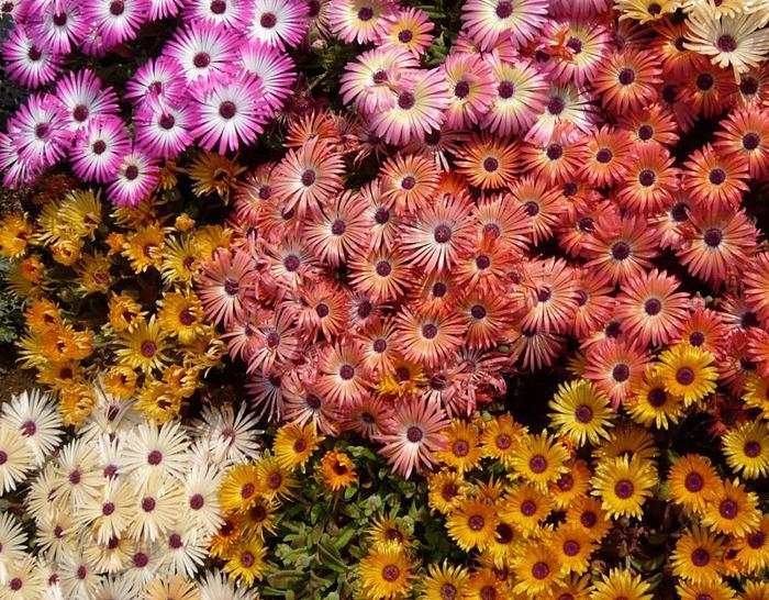 Японский Парк цветов Асикага (Ashikaga Flower Park) -2 27764