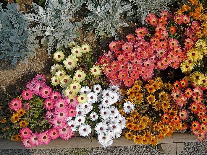 Японский Парк цветов Асикага (Ashikaga Flower Park) -2 18780
