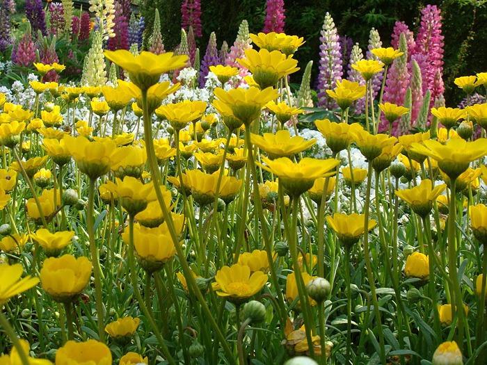 Японский Парк цветов Асикага (Ashikaga Flower Park) -2 31601