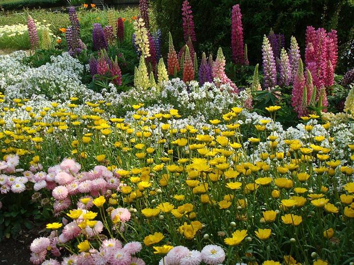 Японский Парк цветов Асикага (Ashikaga Flower Park) -2 19771
