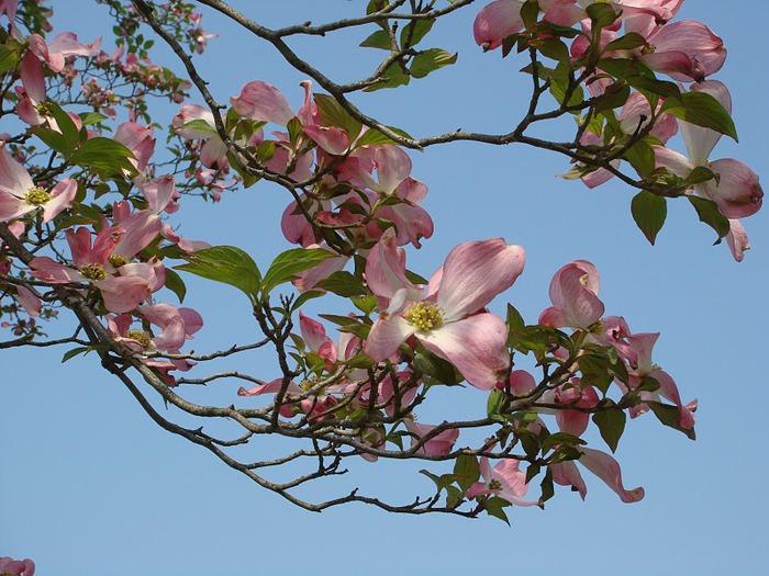 Японский Парк цветов Асикага (Ashikaga Flower Park) -2 74380
