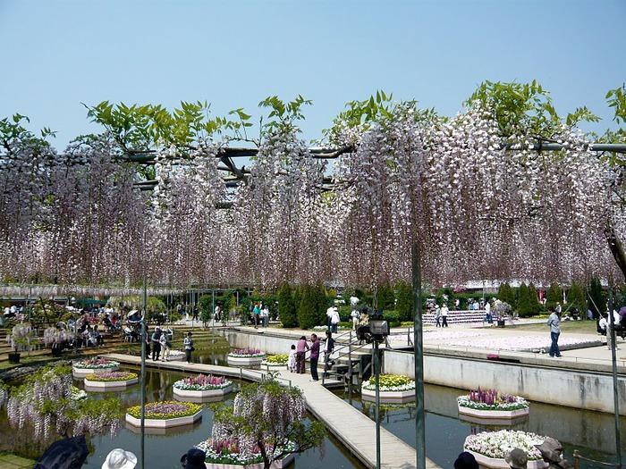 Японский Парк цветов Асикага (Ashikaga Flower Park) -2 67736