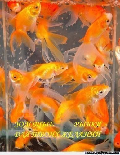 для твоих желаний золотые рыбки (387x500, 33 Kb)