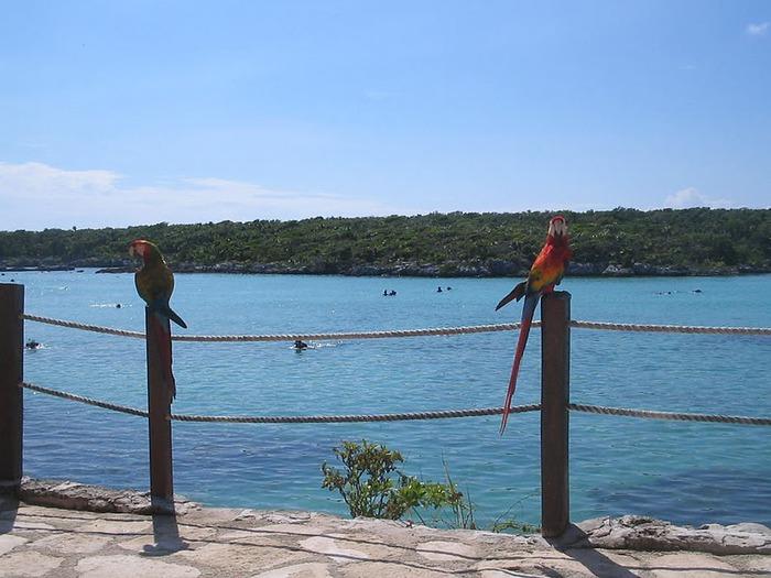 Парк Xel-Ha в Мексике 31621