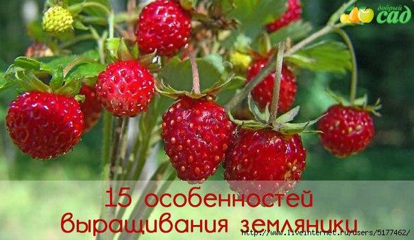 5177462_original_3_ (604x351, 137Kb)