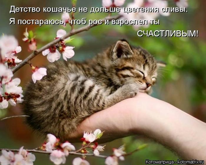 kotomatritsa_m6 (700x560, 254Kb)