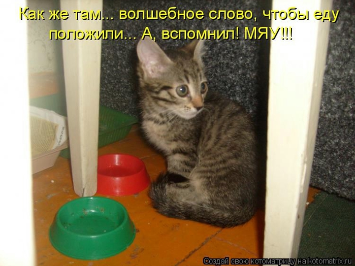 kotomatritsa_9h (700x524, 228Kb)