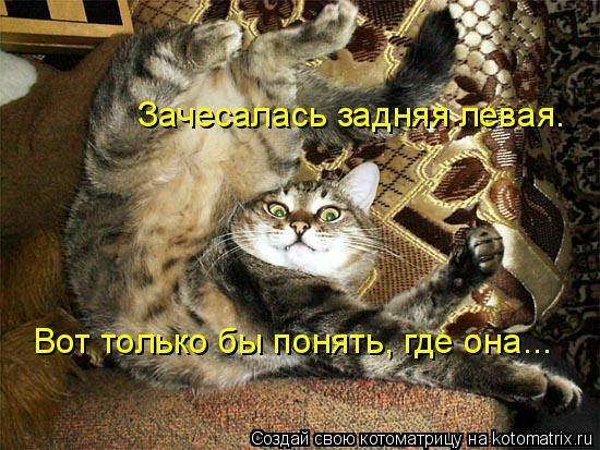 kotomatritsa_q_ (550x413, 167Kb)
