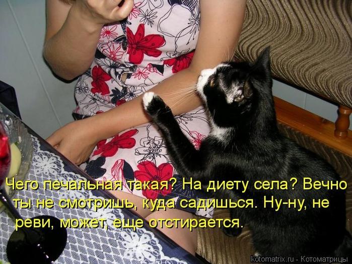 kotomatritsa_QS (700x524, 307Kb)