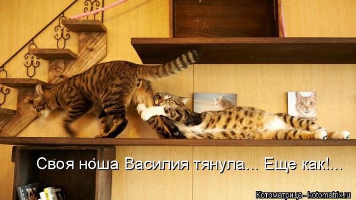 kotomatritsa_YP (700x392, 194Kb)