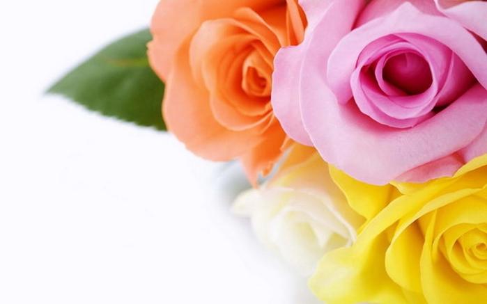 flowers0064 (700x437, 119Kb)